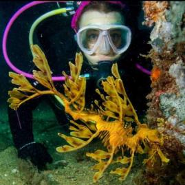 Diving with a beautiful leafy sea dragon in South Australia