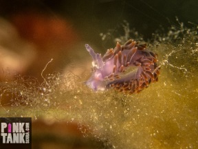 LOGO Brown and purple nudi landscape