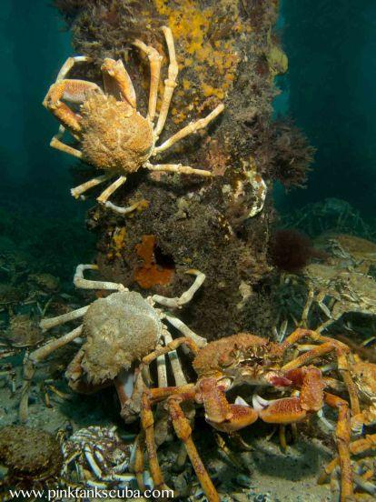 3 different coloured crabs on pylon