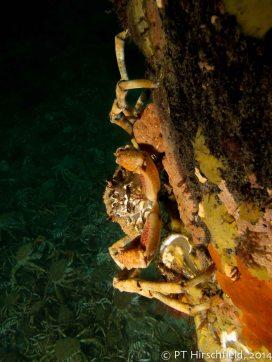 3 sideways crab on pylon with crabs behind