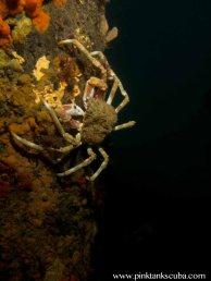 crab on pylon against black