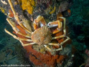 crab on pylon with crabs below