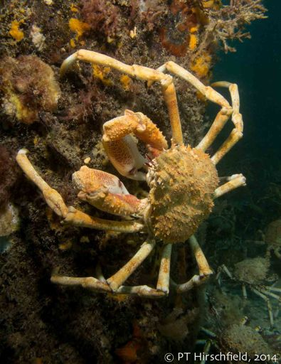 cream crab on pylon