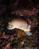cream nudi with orange spots on pylon