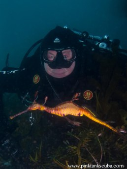 geoffrey and sea dragon