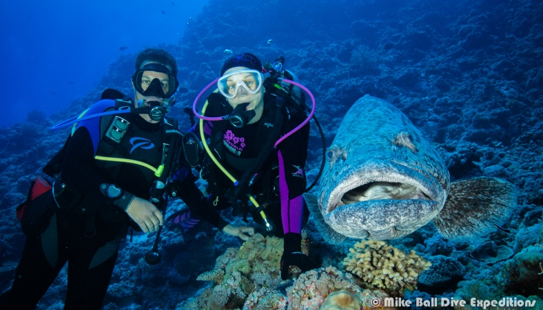 Spunky Abe, PT and our new best friend, a huge Potato Cod at Cod Hole