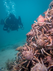 Spider Crab Pyramid with Mark Johnston