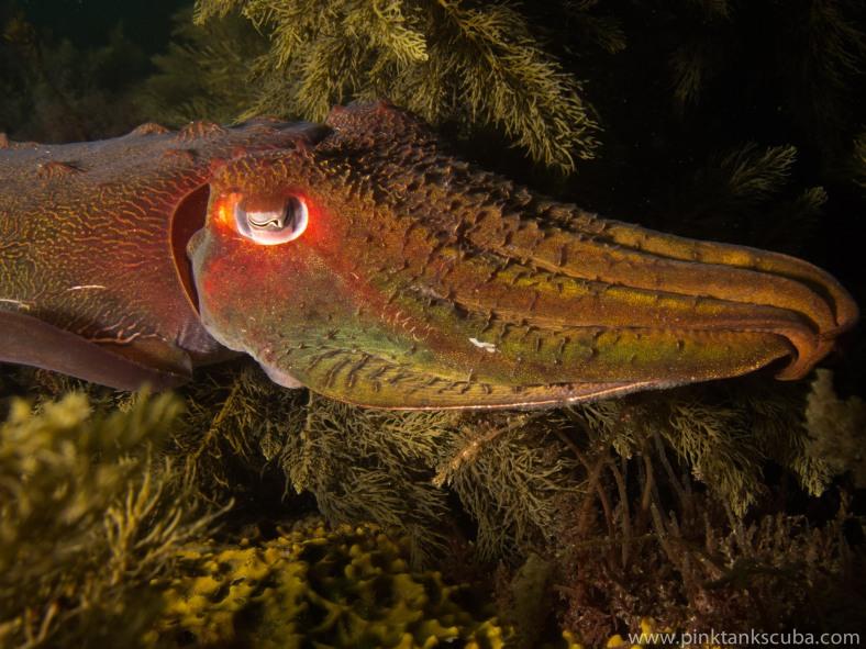 Cuttlefish Bright Landscape
