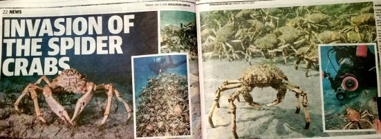 3 July 2015 Herald Sun 'Invasion of the Spider Crabs' Images 1, 2 and 4 were taken by PT Hirschfield but not credited