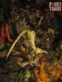 LOGO Seahorse Backflip