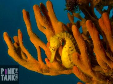 LOGO Seahorse framed by orange sponge