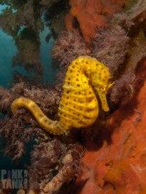 LOGO Seahorse on Blair Pylon