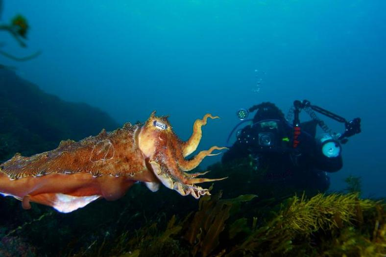 Photo of PT and cuttlefish 2 weeks earlier courtesy of Geoffrey Van Damme