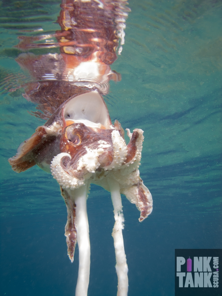 LOGO Cuttlefish Disintegrated