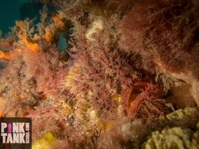 LOGO Tasseled Angler Hiding in Sponge-4