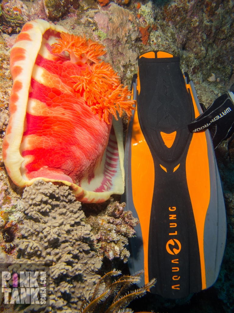 LOGO Gigantic Nudibranch and fin