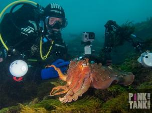 LOGO Geoffrey Van Damme and Cuttlefish