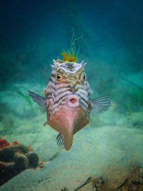 Dive Log Edit Cowfish Mohawk