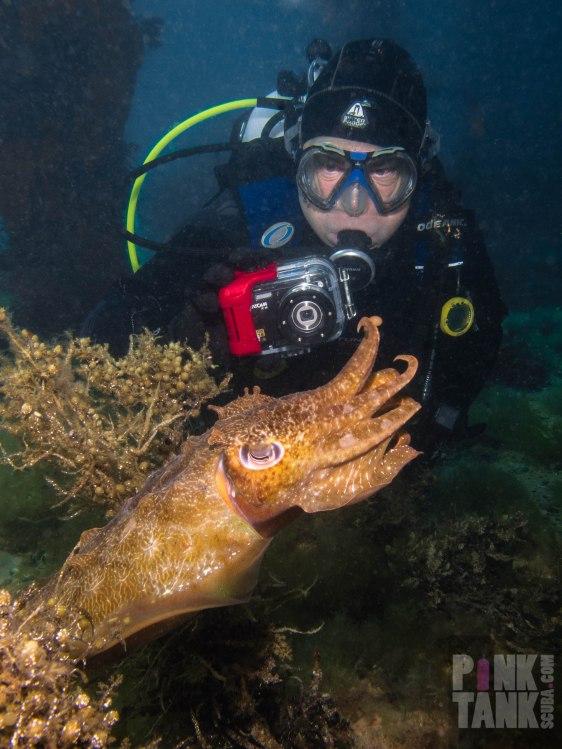 logo-david-hilbig-with-cuttlefish