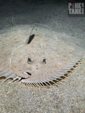 logo-flounder-front-on