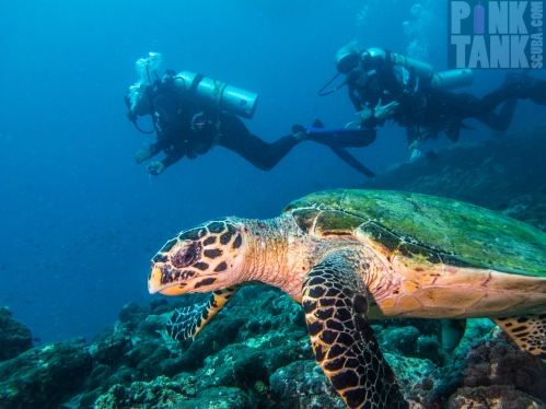 LOGO Maldives Turtle with Divers