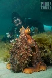 LOGO Mervyn with Octopus