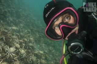 LOGO PT Spider Crab Selfie