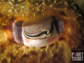 LOGO Super Close Cuttle Eye