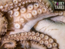 LOGO Octopus Tentacles Close Up
