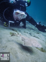 LOGO Angel Shark and Diver