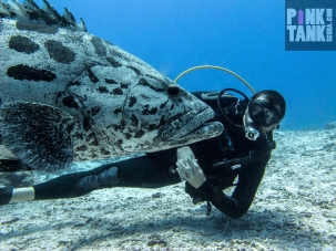 LOGO Male Diver and Potato Cod