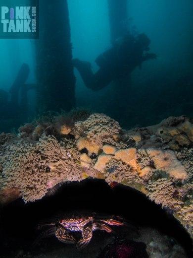 LOGO Crab Hide and Seek