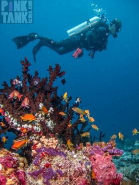 LOGO Maldives Male Diver in Camo Wetsuit