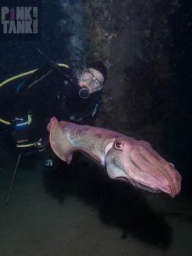 LOGO Ruth and Diagonal Cuttlefish