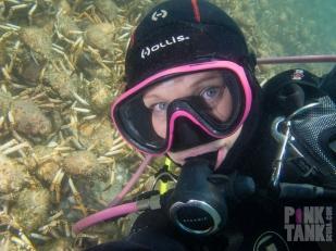 LOGO Spider Crab Selfie 7 March 2018